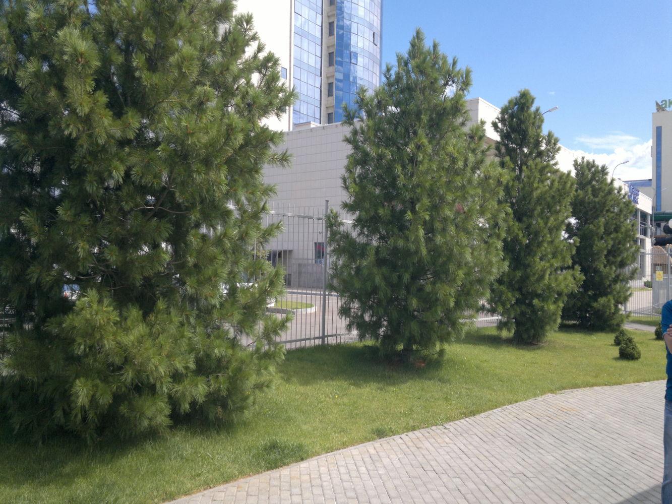 Лиственные деревья средней полосы фото и названия